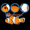 ocellaris-clownfish-features